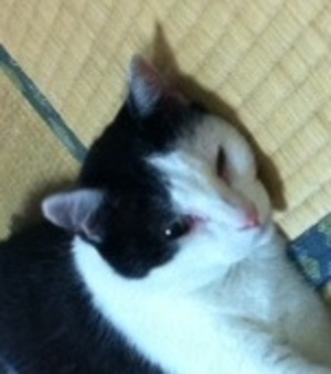 Image1akiko