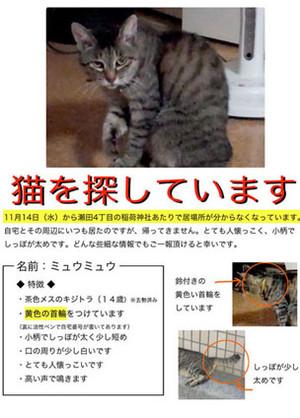 Miumiu_